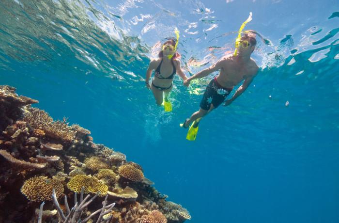 Reef Snorkling