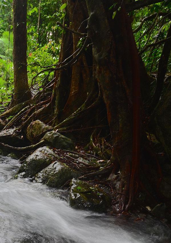 Creek in Cape Tribulation