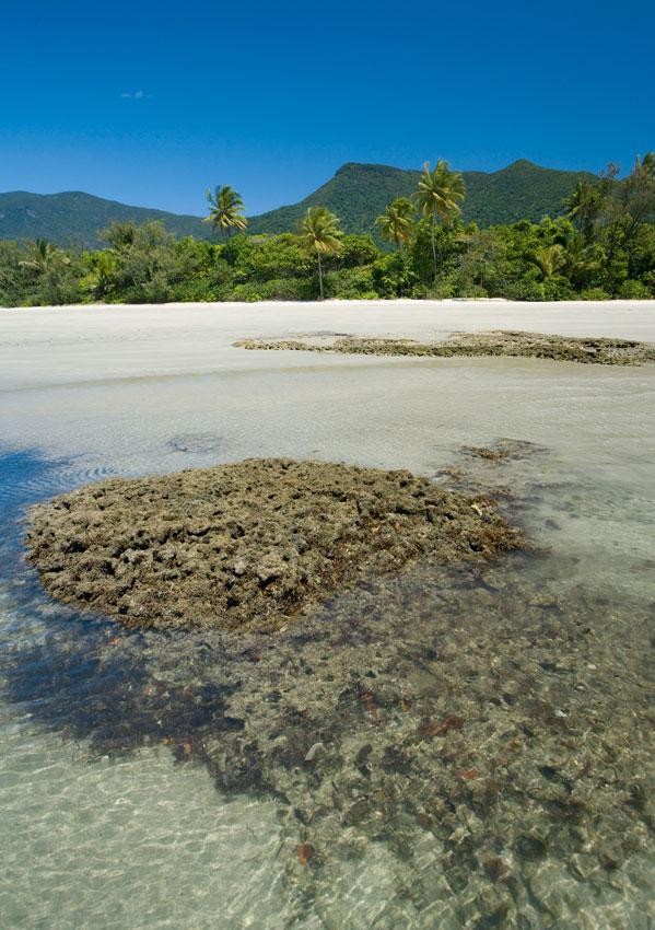 Reef Meets Rainforest