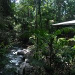 Daintree-Rainforest-Accommodation-Black-Palm-Cape-Tribulation
